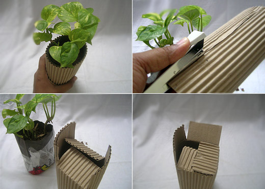 Gift a Plant - DIY Green Gifting Tutorial for Eco Friendly Party ...