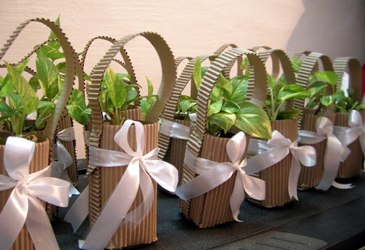 Image result for GIFTING GREEN PLANTS