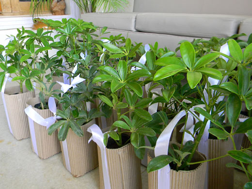 Gift A Plant DIY Green Gifting Tutorial For Eco Friendly Party