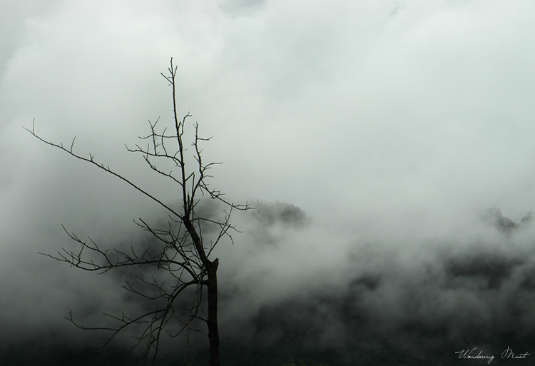 dry tree, wandering mist, hills, forest, cycle of life, misty woods, misty tree, old tree