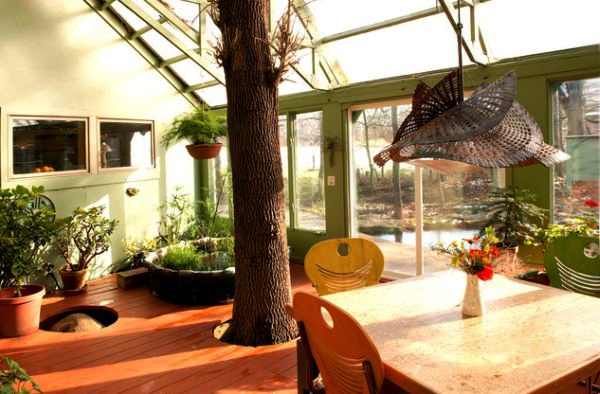 living trees in sunrooms add more nature