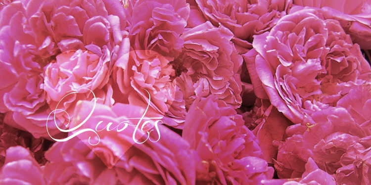 love quotes and quotations midst fragrant pink roses